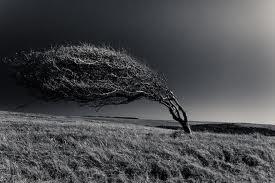 a wind